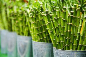 Bamboe kleding, 7 belangrijke voordeelen