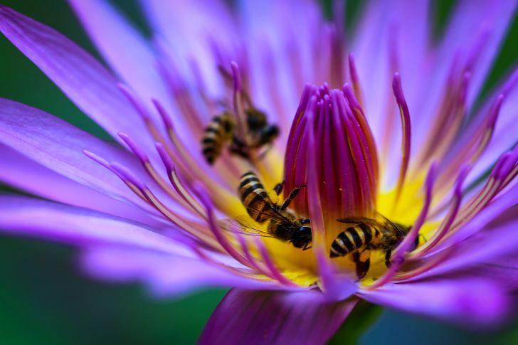 Wespen en bijen in een water lily